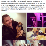 Meatloaf will do anything for love, including Rescuing a dog from a dumpster.