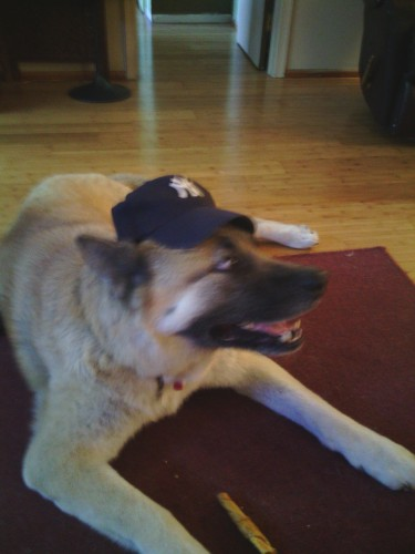 rp_Big-Bears-a-Yankee-Fan-375x500.jpg