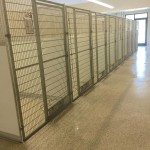 Every Animal Adopted at Ohio Shelter