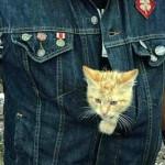 This Biker and Tabby Cat have the Friendship of Your Dreams