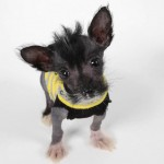 Tiny Rescue Pup Wearing Sock-Sweaters is the Cutest Thing You'll See Today