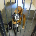 Viral Photo Helps Hugging Rescue Dogs Find Home