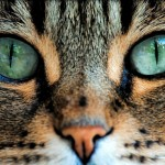 Your Cat is Definitely Speaking to You