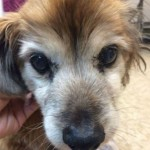19-Years-Young Dog to be Happily Spoiled in his Golden Years