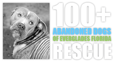 100+ Abandoned Dogs