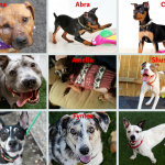 Please Help Find These Pups Their Fur-ever Homes!