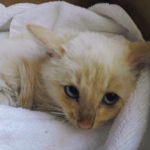 Adorable Kitten Survives Against the Odds