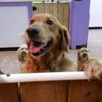 Dog Checks Himself Into Doggy Day Care Because He Just Can't Get Enough