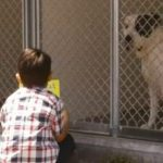 "6-Year-Old Reads to Shelter Dogs, ""Because They Are Alone"""
