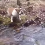Cute Dog Video of the Day